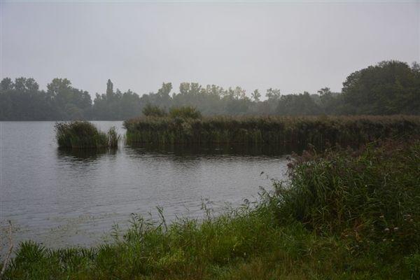 Vijvergebied-de-Wijers