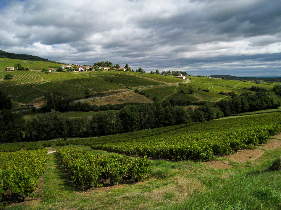 Frankrijk - Beaujolais: Zuid-Bourgondië - charmelogies