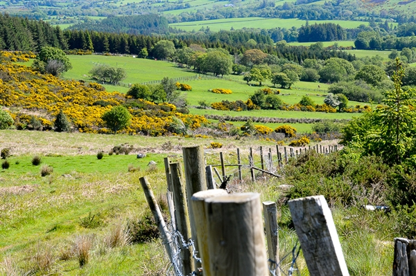 Ierland - Ezeltjestocht in de Wicklow Mountains